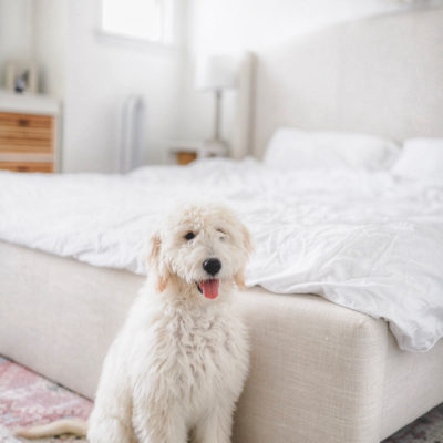 Our Growing Golden Doodle Macy Lynne | 5 Months Old